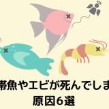 熱帯魚が死ぬ原因