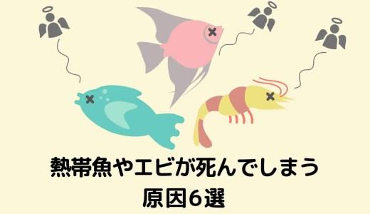 【飼育前にチェック!】初心者が熱帯魚やエビを死なせてしまう原因6選(めだか・金魚も)