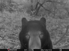 Trail Camera Photos, from Dennis Puls, Frackville, 9-16-2015 (6)