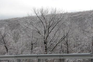 winter-wonderland-ice-on-trees-along-sr54-and-interstate-81-barnesville-1-24-2017-23
