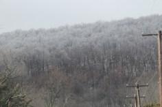 winter-wonderland-ice-on-trees-along-sr54-and-interstate-81-barnesville-1-24-2017-7