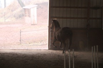 horses-at-horses-and-horizons-therapeutic-learning-center-west-penn-1-21-2017-34