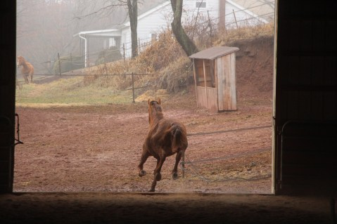 horses-at-horses-and-horizons-therapeutic-learning-center-west-penn-1-21-2017-36
