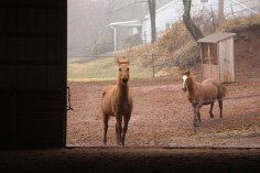 horses-at-horses-and-horizons-therapeutic-learning-center-west-penn-1-21-2017-37