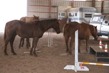horses-at-horses-and-horizons-therapeutic-learning-center-west-penn-1-21-2017-68