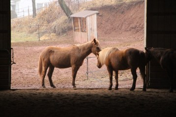 horses-at-horses-and-horizons-therapeutic-learning-center-west-penn-1-21-2017-78