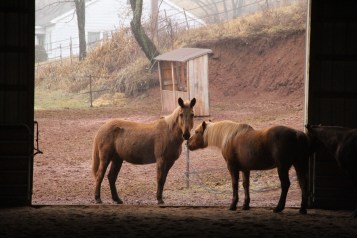 horses-at-horses-and-horizons-therapeutic-learning-center-west-penn-1-21-2017-79
