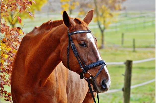 As you know, we know about owning horses at home. Horse ownership and riding will always be costly, but here are a few ways you can keep it more manageable.