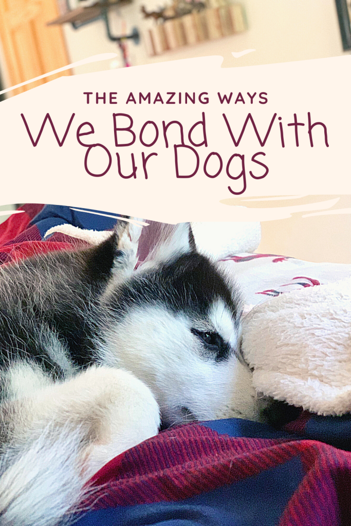 #sponsored The ways in which with our dogs is truly amazing. Here are easy ways you can show love to your dogs today. #wellnesscorerawrev @wellnesspetfood