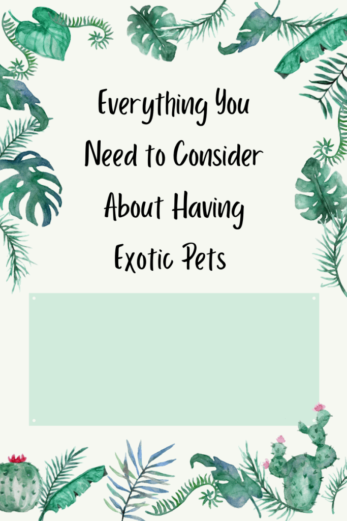 Everything You Need to Consider About Having Exotic Pets. Are you interested in learning more about having exotic pets?