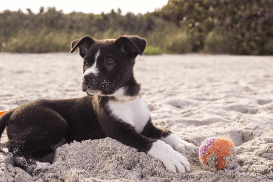 Owning a dog is very rewarding, but can affect your life. Here are a few questions to ask yourself to help know if you're ready to get a dog.