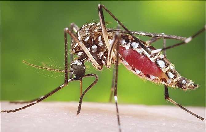 Mosquito - From the CDC.