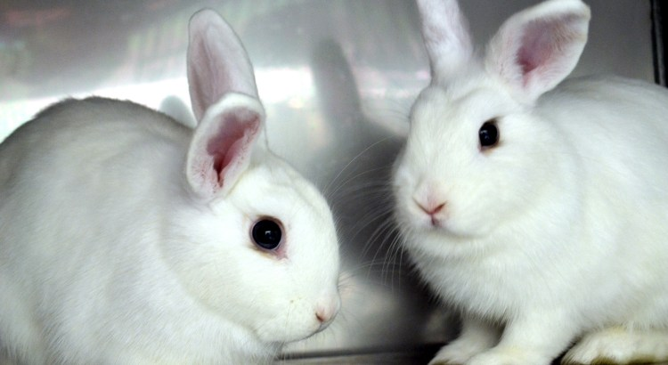 Hop Over to the Bunny Basics Workshop at the Humane Society