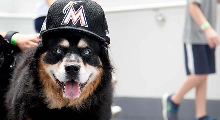 'Bring Your Dog to 'Bark in the Park' with the Miami Marlins
