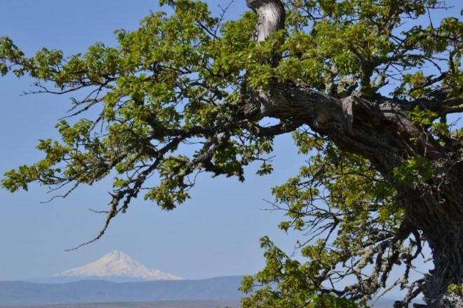 Mt. Hood, Washington, Oregon