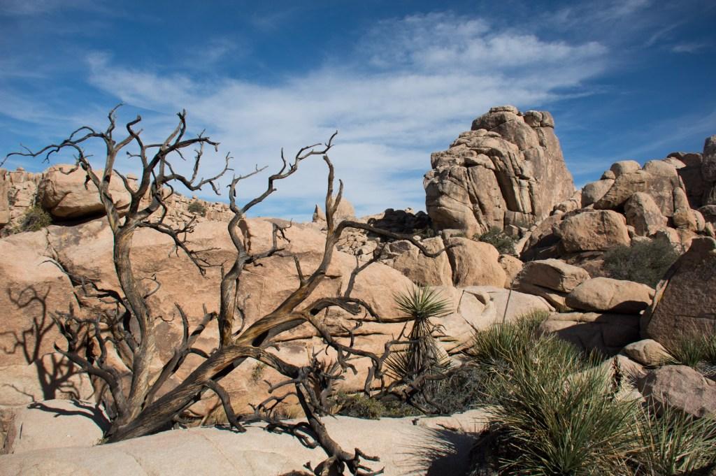 Joshua Tree National Park, Californina