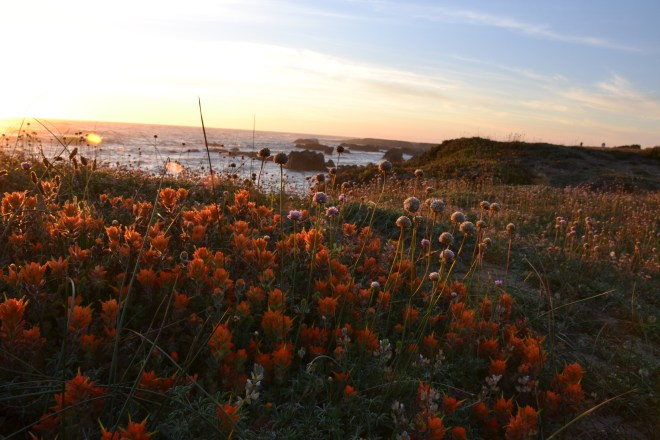 California, Pacific Ocean, paintbrush, wildflowers