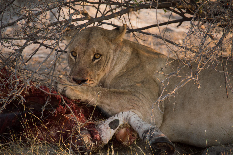 Moremi National Park, Botswana