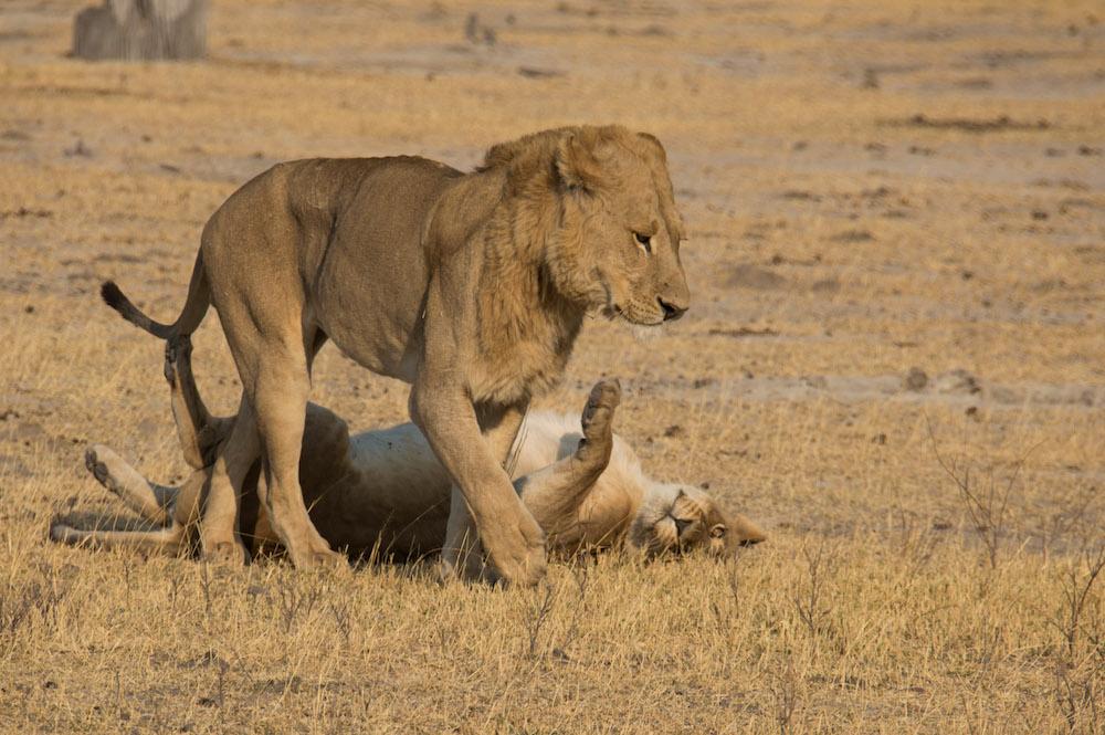 Moremi National Park, Botswana, Africa