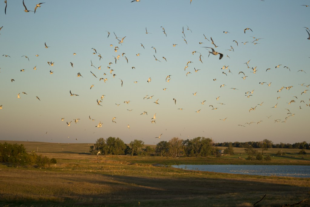 sky full of gulls
