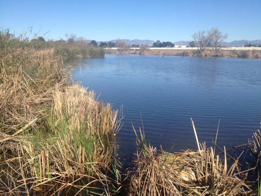 Sepulveda Basin Wetlands