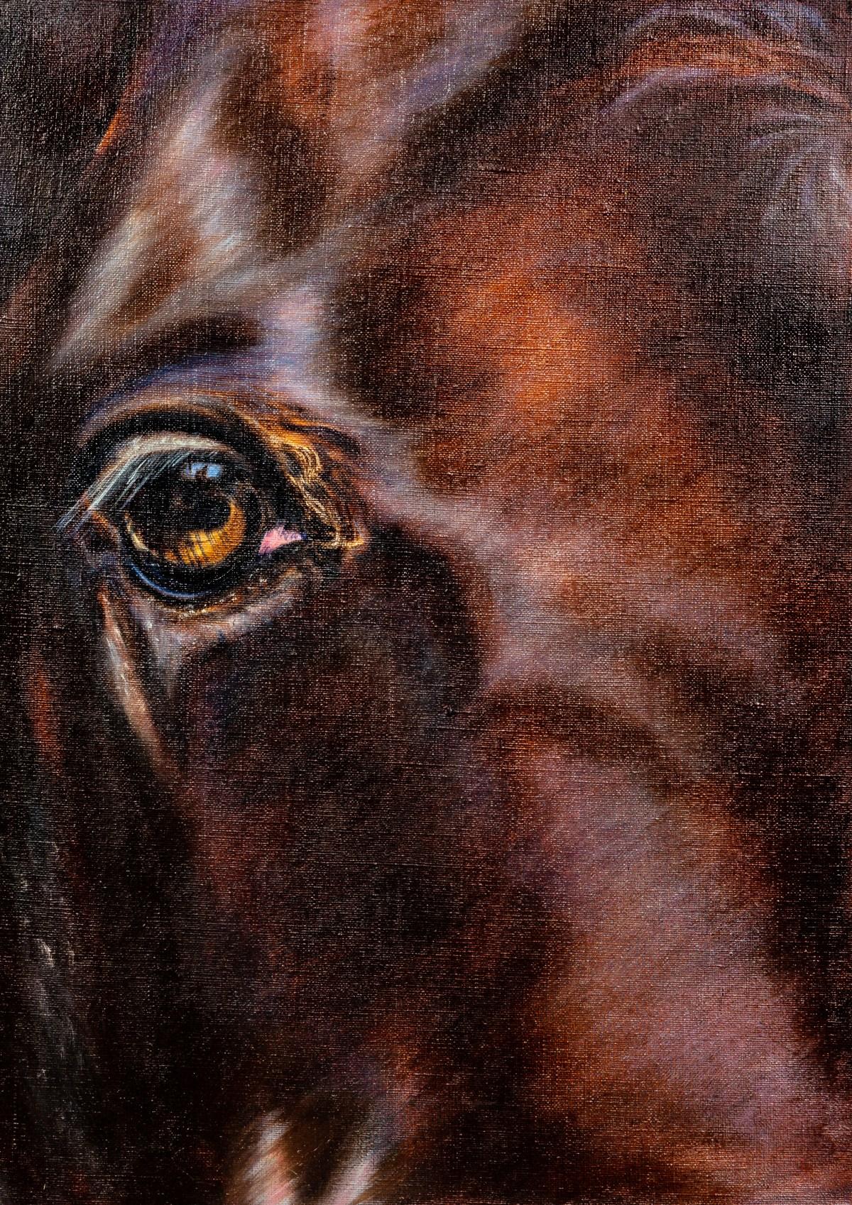 Horse eye. Oil, 2017
