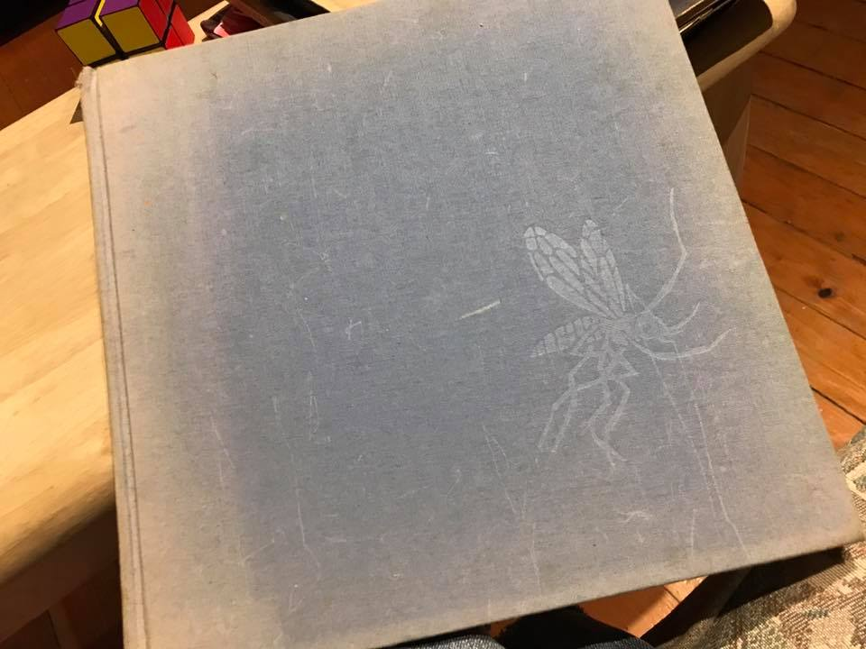 1981 Hardcover Children's Book, Why Mosquitoes Buzz In People's Ears