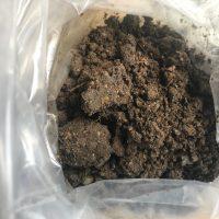 Calabasas California Soil Sample Testing Lead Safe Mama 3