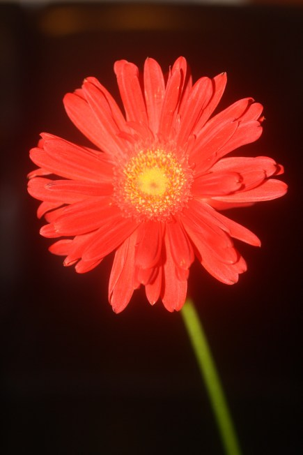 Daisy, digital photography, prices starting at $25.00