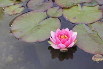 Water Lily, digital photography, prices starting at $25.00