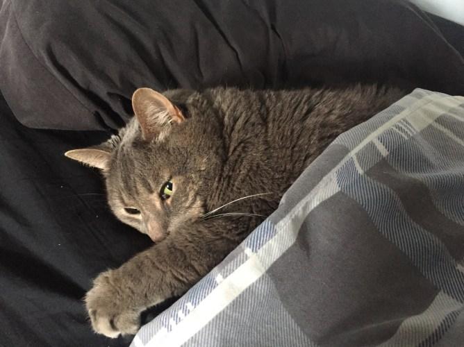 Niles the Cat