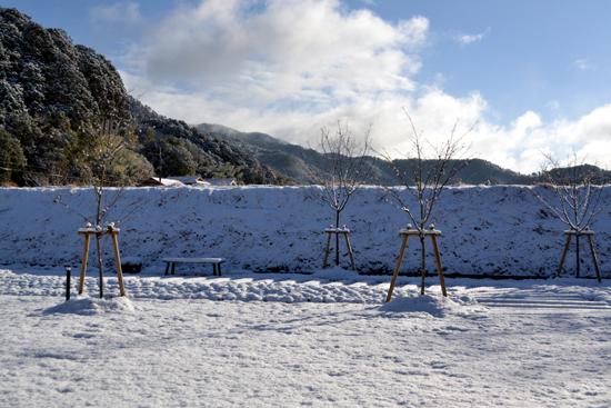 20140110雪が降りました003