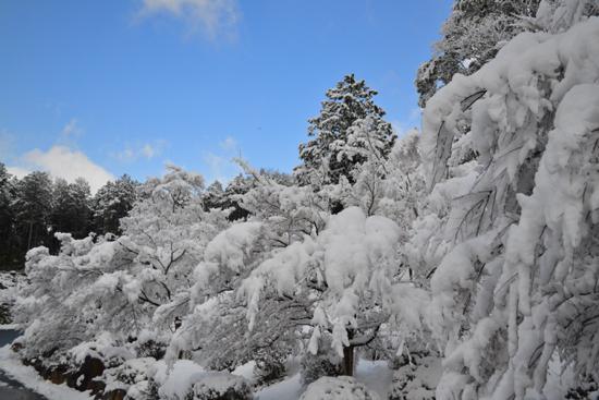 丹波に雪002