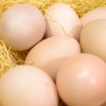 丹波の鶏卵
