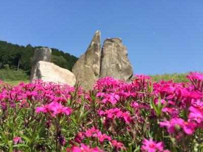 芝桜フォト2015_006
