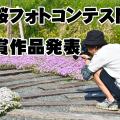 【夢の里やながわ 芝桜フォトコンテスト2015】結果発表