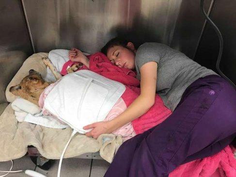 Dokter Hewan yang Rela Tidur dengan Pasien Kritis