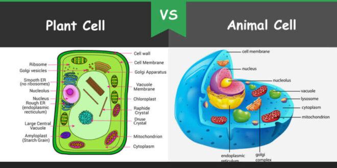 Perbedaan Sel Hewan dan Sel Tumbuhan