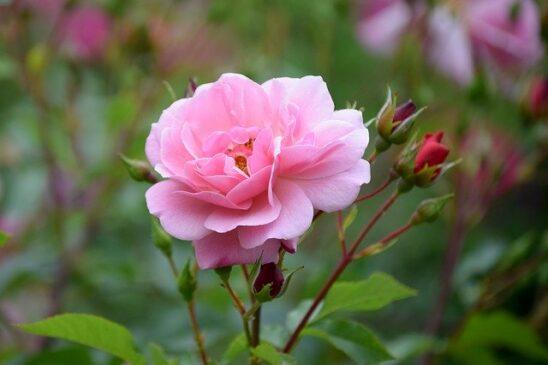 Kingdom Plantae dan Manfaatnya dalam Kehidupan