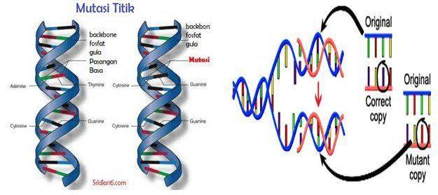 Mutasi Serta Dampaknya Pada Makhluk Hidup