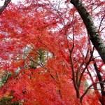 百済寺(湖東三山)の紅葉、行くルートと見ごろな時期について
