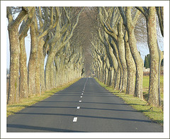 Road lined with bare trees