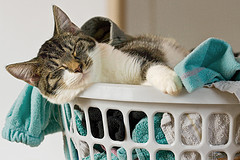 kitten in laundry basket