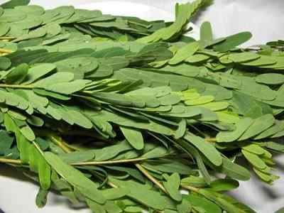Agathi Keerai Health Benefits in Tamil - அகத்திக்கீரை