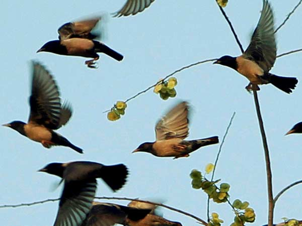 அறிவியல் ஆராய்ச்சியாளர்களால் கூட பதிலளிக்க முடியாத 10 இயற்கை நிகழ்வுகள்!