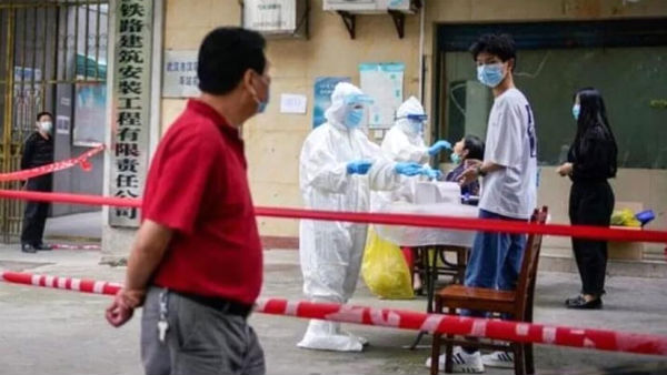 Is this how corona virus spread to humans ?: Wuhan lab scientists admit being bitten by Covid-infected bats