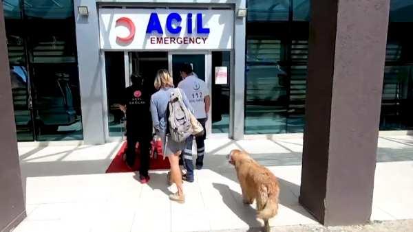 स्नेही कुत्ता अपने मालिक तुर्की के लिए एक अस्पताल के बाहर इंतजार कर रहा है