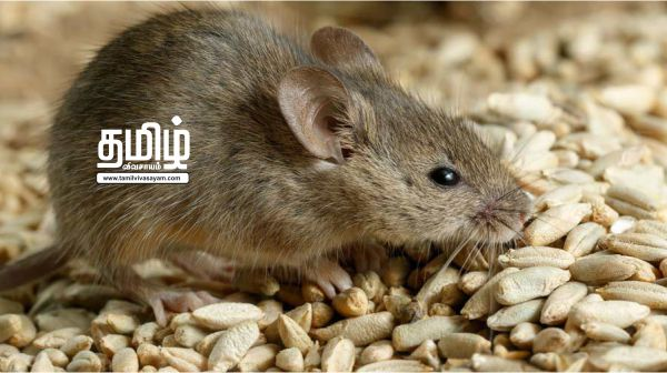 New technology that catches rats