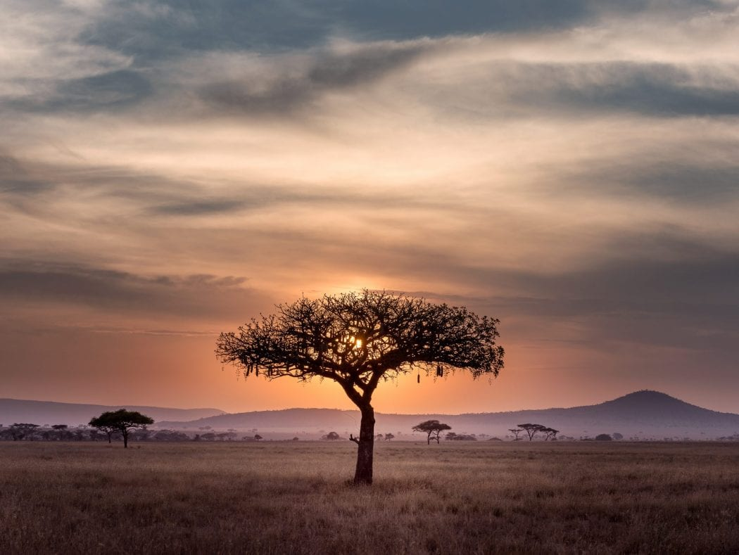 Want to Help Africa? Go on a Safari!