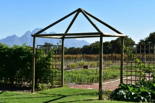organic-garden-franschhoek
